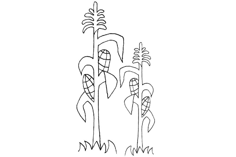 corn stalks coloring pages - photo#13